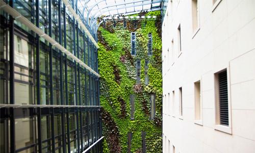 Zelené stěny v interieru
